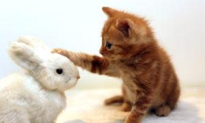 サービス 動物と触れ合いに